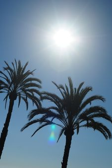 Free Sun And Palm Trees Royalty Free Stock Image - 27565076