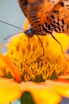 Free Closeup Butterfly On Flower Stock Photos - 27569253