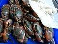 Free Crabs Stock Photo - 27574070