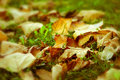 Free Fallen Autumn Leaves Royalty Free Stock Images - 27576089