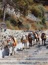 Free Santorini Donkeys Royalty Free Stock Image - 27577946