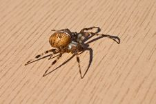 Free Spider Stock Photos - 27570603