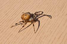Free Spider Stock Photos - 27570603