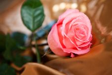 Free One Flower On Silk Fabric Stock Photography - 27571692