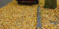 Free Autumn Background Royalty Free Stock Image - 27574216