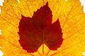 Free Leaf Detail Royalty Free Stock Photos - 27587728