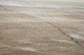 Free Salty Land And Footprints Stock Photos - 27589643