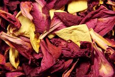 Dry Petals Royalty Free Stock Image