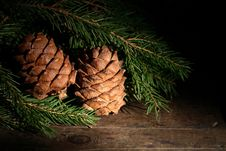 Free Cedar Cones Royalty Free Stock Photography - 27588367