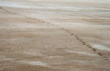 Free Salty Land And Footprints Stock Photos - 27589643