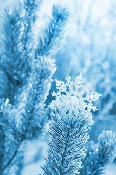 Free Festive Background Stock Image - 27589901