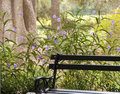 Free Garden Bench Royalty Free Stock Images - 27593039