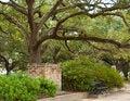 Free Live Oak Tree Stock Photography - 27593062