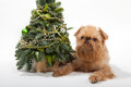 Free Christmas And Dog Royalty Free Stock Image - 27594596