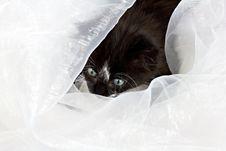Free Kitten Looking Through Fabric Stock Photo - 27595650