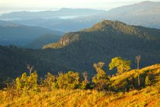 Free Trees On The Ridge. Stock Photo - 27597180