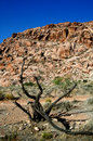 Free Barren Tree Red Rock Canyon Stock Photo - 2763180