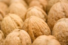 Free Walnuts Royalty Free Stock Image - 2760286
