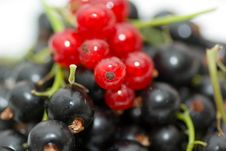 Free Redcurrant And Blackcurrant Stock Photo - 2762340