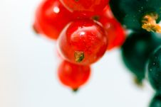 Free Redcurrant And Blackcurrant Stock Photography - 2762402