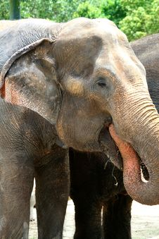 Free Asian Elephant Royalty Free Stock Photography - 2762917