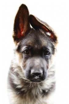 Free Dog Stock Image - 2764681