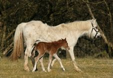 Free Mother And Foal Stock Image - 2766671