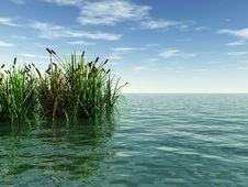 Free Water Plants Stock Photo - 2767280