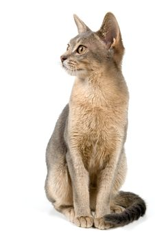 Free Kitten In Studio Royalty Free Stock Images - 2767429