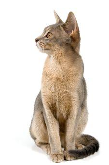 Free Kitten In Studio Stock Photography - 2767432