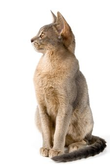 Free Kitten In Studio Royalty Free Stock Images - 2767439