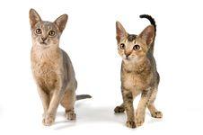Free Kitten In Studio Stock Photos - 2767443