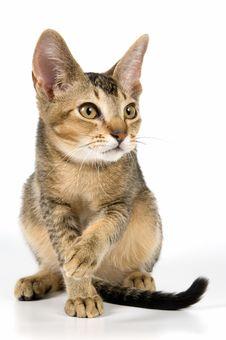 Free Kitten In Studio Stock Image - 2767451
