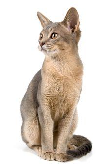 Free Kitten In Studio Royalty Free Stock Image - 2767506