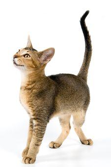 Free Kitten In Studio Stock Image - 2767511