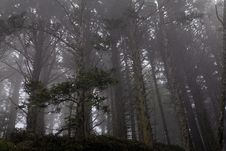 Free Forest In Fog Stock Photography - 2767562