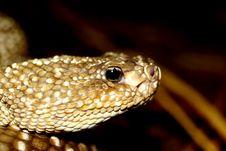 Free Venomous Snake Stock Photos - 2768413