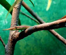 Free Venomous Snake Stock Image - 2768421