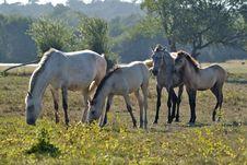 Free Horses Nurturing Stock Images - 2768734