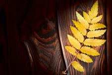 Free Autumn Leaf On The Boards Royalty Free Stock Photo - 27608315