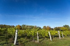 Free Autumn Vineyard Stock Image - 27613211