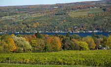 Autumn Vineyard Stock Photography