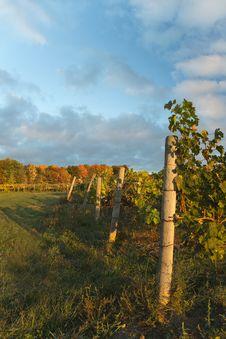 Free Autumn Vineyard Stock Photos - 27613413