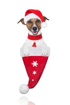 Free Santa Christmas Dog In A Hat Royalty Free Stock Images - 27619569