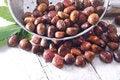 Free Chestnut Royalty Free Stock Photo - 27620755