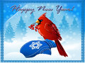 Free The  Northern Cardinal Sitting On A Blue Mitten Stock Images - 27627094