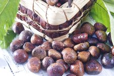 Free Chestnut Royalty Free Stock Photos - 27620398