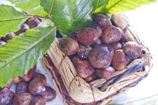 Free Chestnut Stock Photos - 27620653