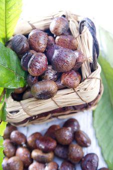 Free Chestnut Royalty Free Stock Photos - 27620698