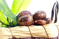 Free Chestnut Royalty Free Stock Images - 27620719